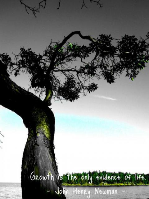 To Grow: A Postcard from Gabriola