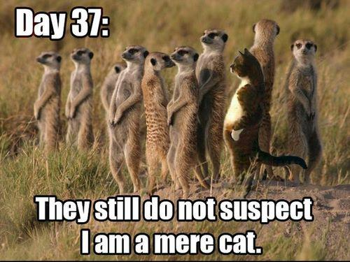 Are You An Impostor?