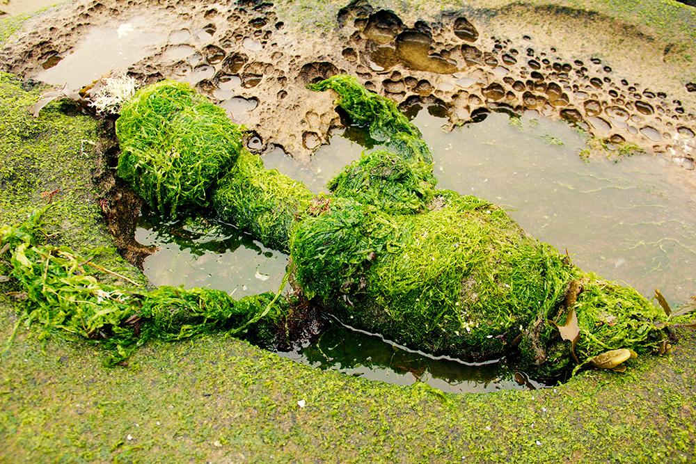 Ayala Reznik - seaweed goddess