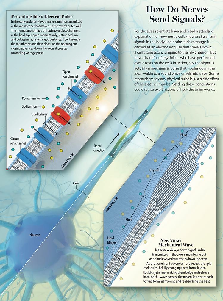 nerves sending signals