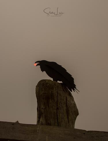 Raven Steals the Smokey Sun