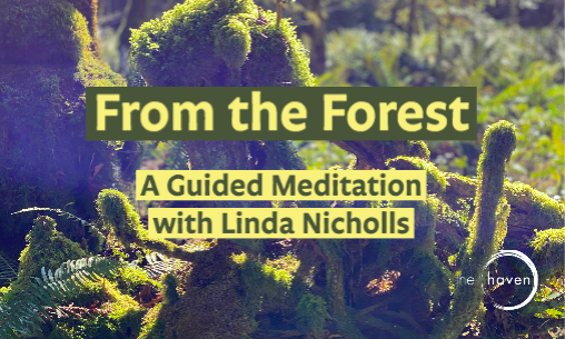 From the Forest: A Guided Meditation Series with Linda Nicholls