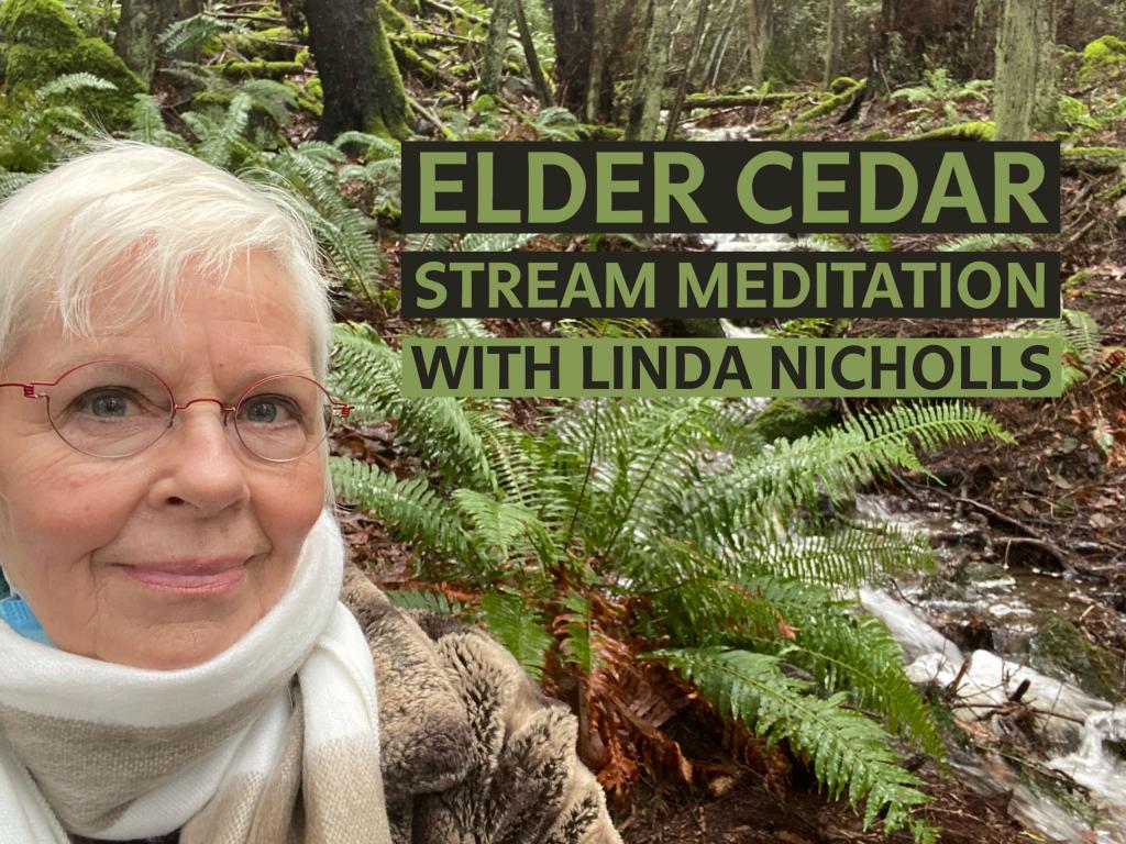 LISTEN: Elder Cedar Stream Meditation with Linda Nicholls